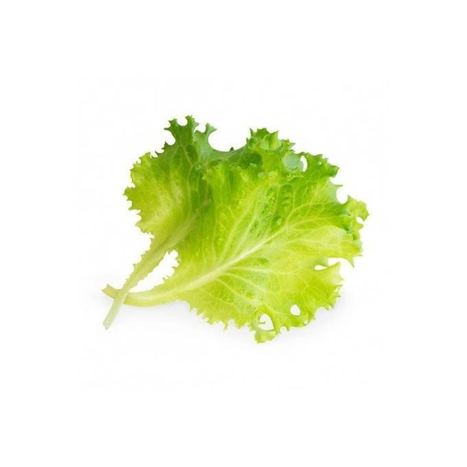 Véritable Lingot Hlávkový salát
